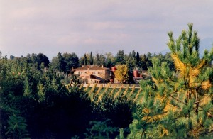 Campolucci, The Manucci Droandi Estate