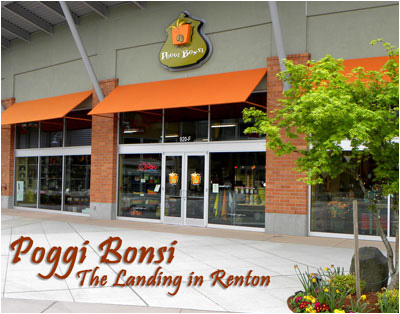 Poggi Bonsi at The Landing in Renton